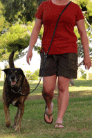 The Link Leash is an easy way to have your hands free while walking your dog