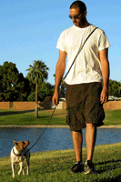 Dog walking with the Link Leash hands free dog leash